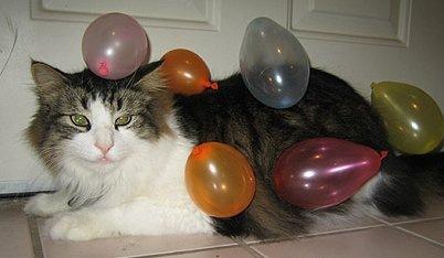 Cat Keeps Being Sick Brown Liquid